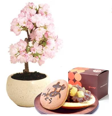 桜盆栽【2020母の日】今年のトレンドは?高齢の母へのプレゼント
