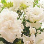 仏壇用 白いカーネーション